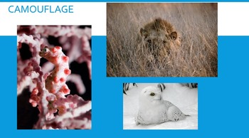 Power Point about Animal Camouflage