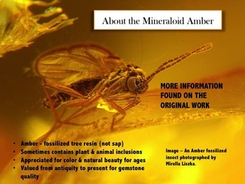 PowerPoint & Study Guide - Rocks and Minerals - The Mineraloids: Amber