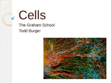 PowerPoint - Cells