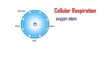 PowerPoint - Cellular Respiration and Photosynthesis
