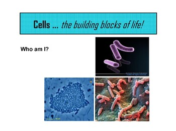 PowerPoint - Common Bacteria and Protista