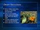 PowerPoint:  Desert Biome & Species Diversity