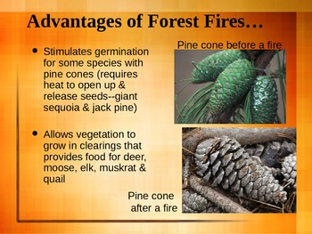 PowerPoint:  Forest Fires