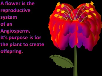 PowerPoint: From Flower to Fruit