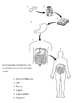 PowerPoint-Human Body, the Coloring Book-Organization from cells to body