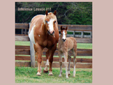 PowerPoint Inference Mare and Foal