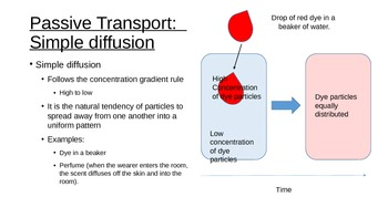 PowerPoint Presentation AND Quiz for Cell Transport