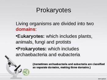 PowerPoint Prokaryotic Cells