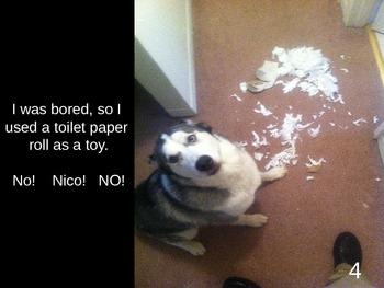 PowerPoint Book - No! Nico! No!
