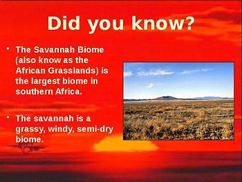 PowerPoint - The Savannah Biome