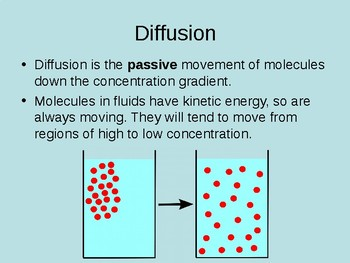 PowerPoint Transport Across the Cell Membrane