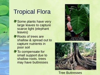 PowerPoint:  Tropical Biomes