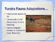 PowerPoint:  Tundra Biome