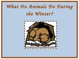 Animals in Winter: What Do Animals do in the Winter PowerPoint