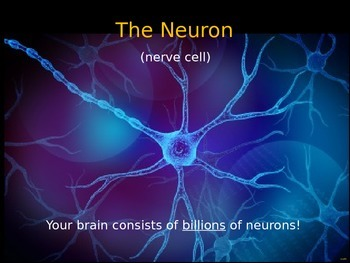 Psychology or Anatomy - PowerPoint - The Neuron