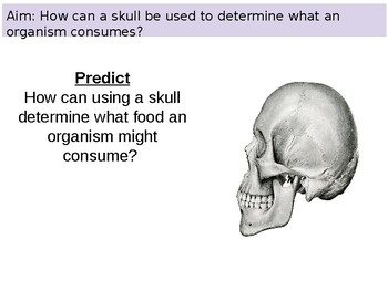 PowerPoint using skulls to determine feeding type