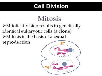 Powerpoint Introduction to Cell Division