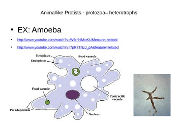 Powerpoint Notes on Protists