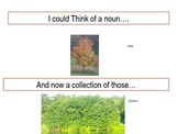 Powerpoint Slideshow to Introduce Collective Nouns- Common