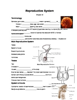 Powerpoint notes for Human Reproduction1