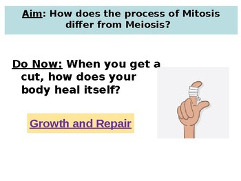 Powerpoint on Mitosis