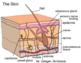Powerpoint on Tissues