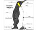 Powerpoint presentation about Emperor penguins