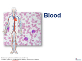 Powerpoint slides + Classroom Quiz Questions on Blood