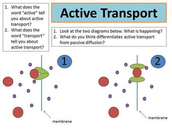 Ppt Presentation: Diffusion, Active Transport, and Concentration Gradients