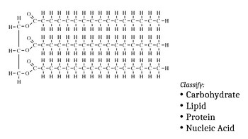 Practice Classifying Biomolecules