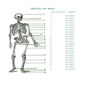 Practice Excel Self checking sheet to learn the bones