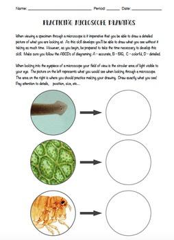 Practice Microscope Drawings
