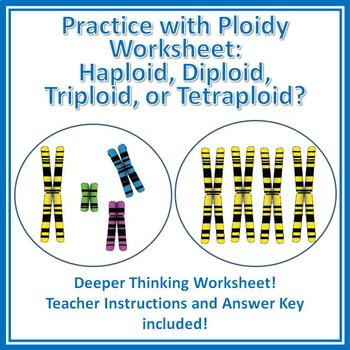 Practice with Ploidy Worksheet: Haploid, Diploid, Triploid, Tetraploid?