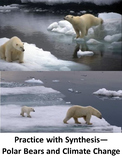 Practice with Synthesis— Polar Bears and Climate Change
