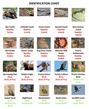 Prairie Animals Bingo