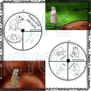 Prairie Dog (Life Cycle Spinner)