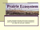 Prairie Ecosystem Powerpoint
