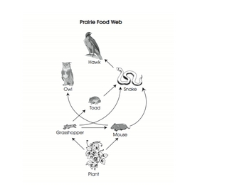 Prairie Food Web- Making Connections