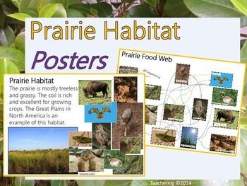 Prairie Habitat and Prairie Animal Food Web Posters