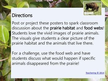Prairie Habitat and Prairie Animal Food Web Posters