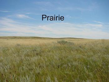 Prairie Review Game