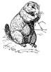 Prairie dog Word Search