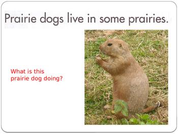 PrairieAndPrairieAnimals