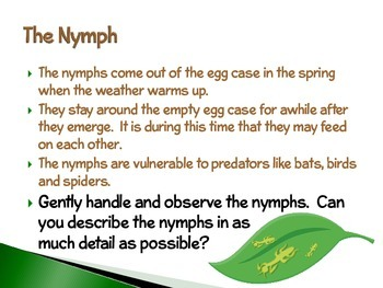 Praying Mantis ~ An Interactive PowerPoint Presentation of their Life Cycle
