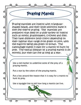 Praying Mantis Close Read