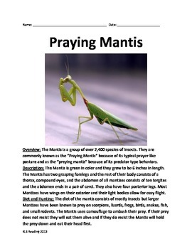 Praying Mantis - Informational Article all the facts - with questions vocab