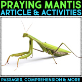 Praying Mantis Informational Article & Comprehension Activities