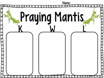Praying Mantis Life Cycle