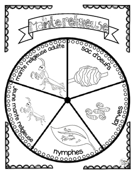 Praying Mantis Life Cycle Craftivity ~ French ~ La mante religieuse