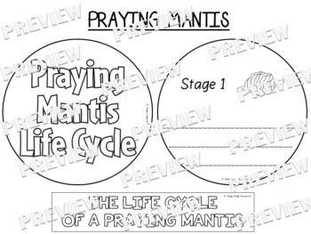 Praying Mantis Life Cycle Factball and Fact Sheet